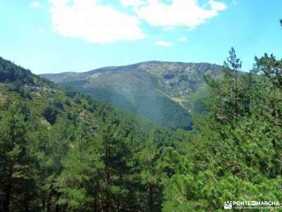 Hayedo Montejo-Cuerda Pinilla; senderismo y excursiones fin de semana senderismo